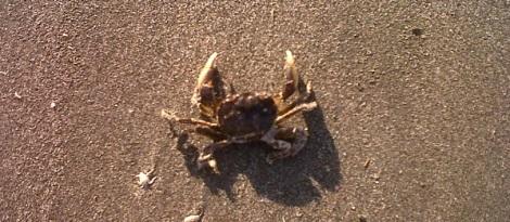 crab_beach